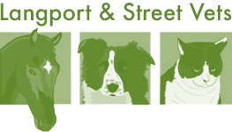 Langport and Street Veterinary Centre – Street