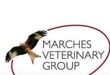 Marches Veterinary Group – Ludlow